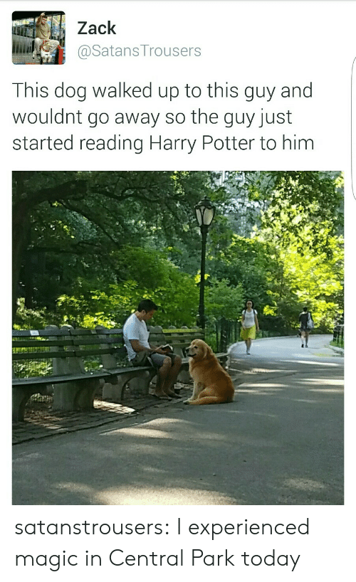 Harry Potter, Target, and Tumblr: Zack  і.iiaily @SatansTrousers  This dog walked up to this guy and  wouldnt go away so the guy just  started reading Harry Potter to him satanstrousers:  I experienced magic in Central Park today