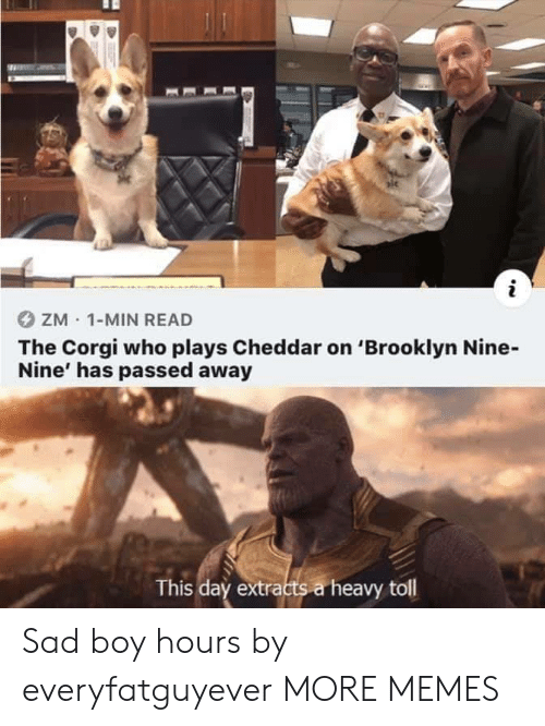 Corgi, Dank, and Memes: ZM 1-MIN READ  The Corgi who plays Cheddar on 'Brooklyn Nine-  Nine' has passed away  This day extracts a heavy toll Sad boy hours by everyfatguyever MORE MEMES