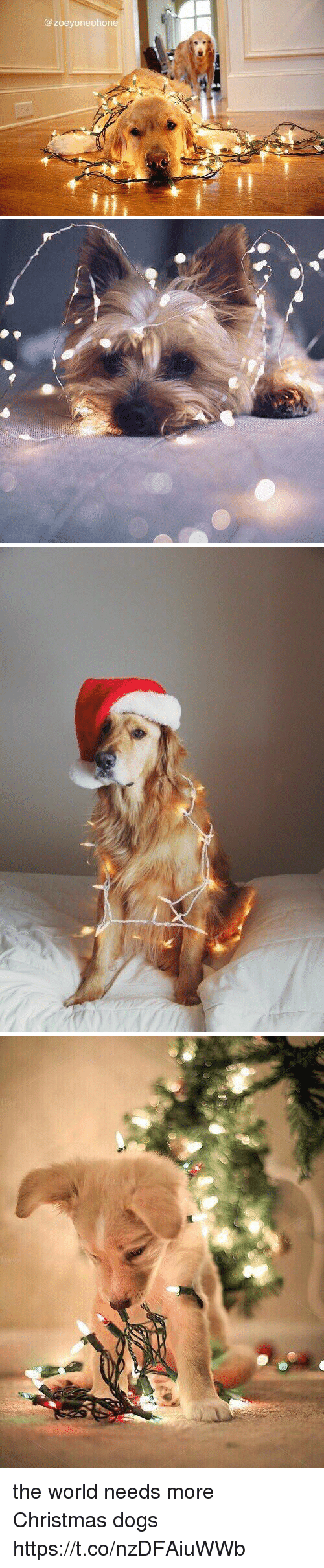 Christmas, Dogs, and World: @ zoeyoneohone the world needs more Christmas dogs https://t.co/nzDFAiuWWb