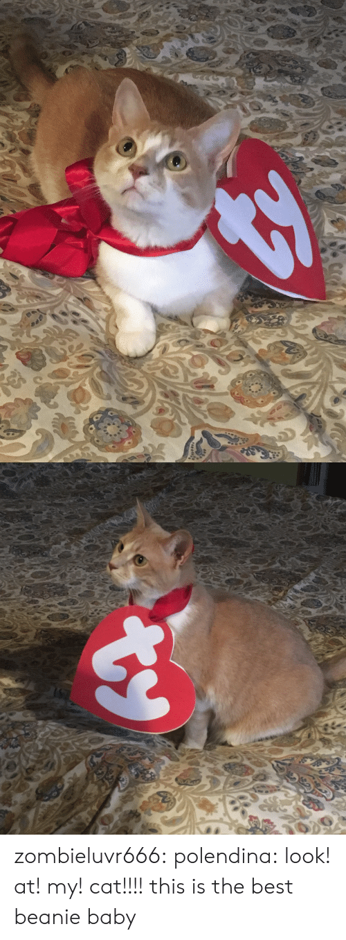 beanie: zombieluvr666:  polendina:  look! at! my! cat!!!!   this is the best beanie baby