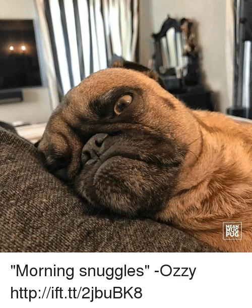 "Memes, 🤖, and Zoo: zoo ""Morning snuggles"" -Ozzy http://ift.tt/2jbuBK8"