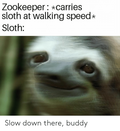Sloth, Speed, and Zookeeper: Zookeeper: *carries  sloth at walking speed  Sloth: Slow down there, buddy