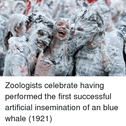 Blue, Artificial, and Blue Whale: Zoologists celebrate having performed the first successful artificial insemination of an blue whale (1921)