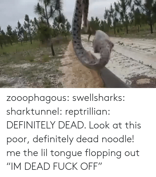 "Definitely, Target, and Tumblr: zooophagous: swellsharks:  sharktunnel:  reptrillian:  DEFINITELY DEAD. Look at this poor, definitely dead noodle!  me  the lil tongue flopping out   ""IM DEAD FUCK OFF"""