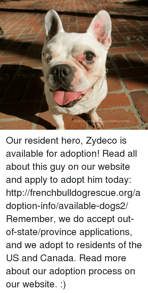 Memes, Canada, and Http: ZYDECO FR  ULLDOGRESCUEORG Our resident hero, Zydeco is available for adoption! Read all about this guy on our website <location, likes, dislikes> and apply to adopt him today: http://frenchbulldogrescue.org/adoption-info/available-dogs2/  Remember, we do accept out-of-state/province applications, and we adopt to residents of the US and Canada. Read more about our adoption process on our website. :)